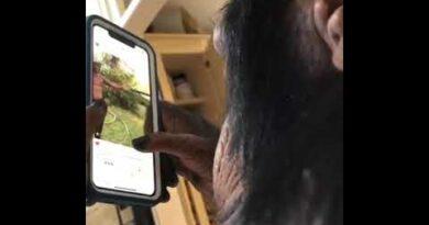 обезьяна смартфон